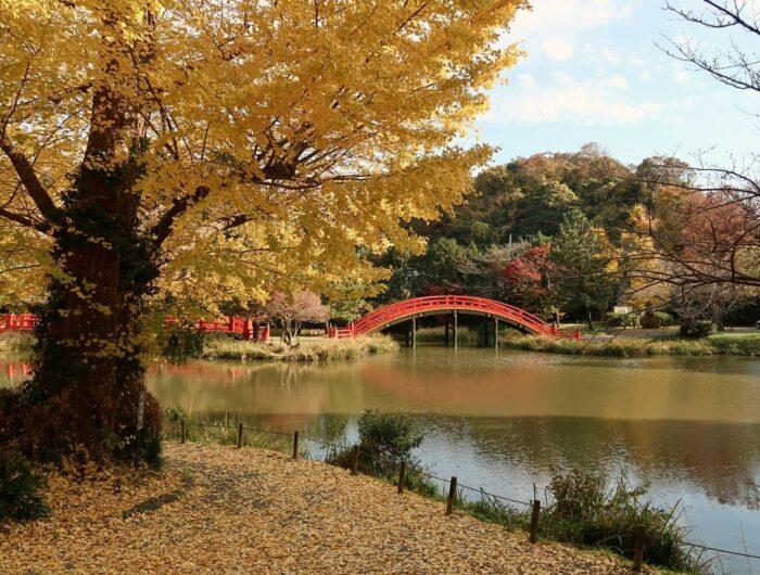 称名寺庭園の紅葉